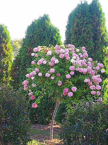 768_PG_Tree_pink