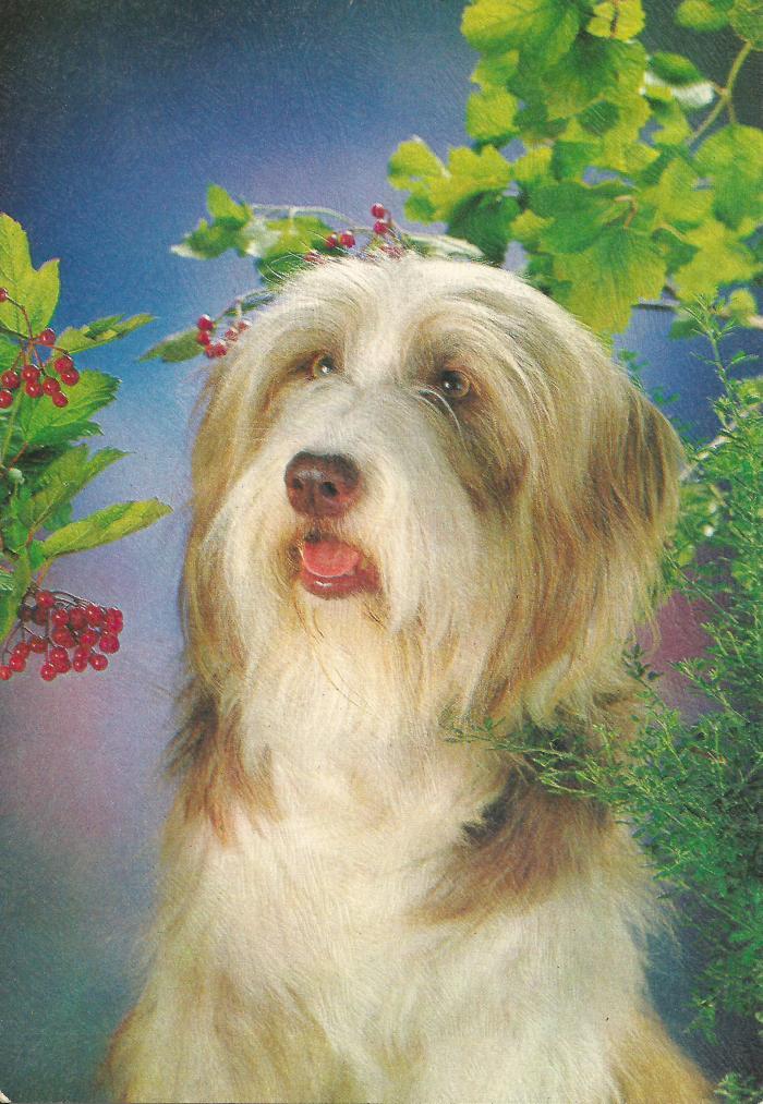 dogcard1